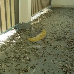AVANT : le balcon
